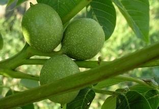 Ekofarma: Sad u ořechového háje, Jezvé